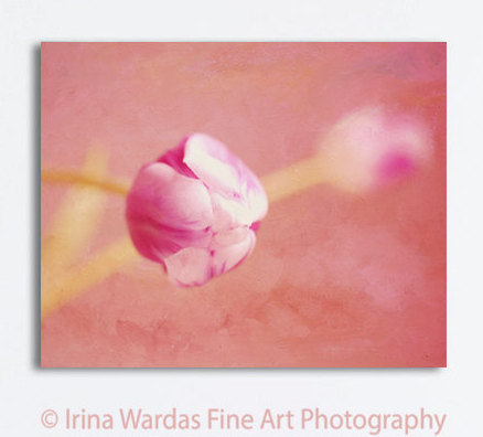 Large wall art canvas photography flower artwork, floral canvas wall art, tulip modern art, peach magenta coral wall decor living room art