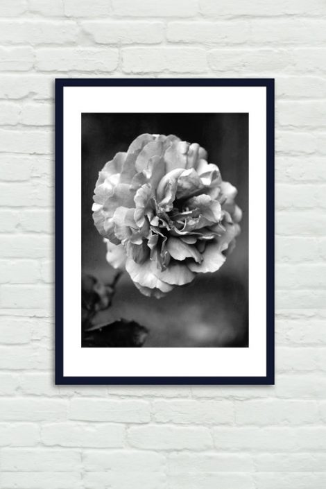 Dark grey flower photography, black and white wall art rose photo print, girls room photo, bathroom bedroom office art vertical floral decor