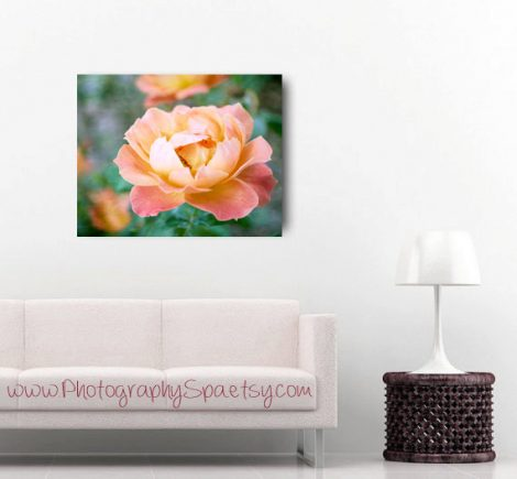 Peach green floral canvas art, flower photography, peach rose picture gallery wrap, large floral art apricot coral wall decor, oversized art