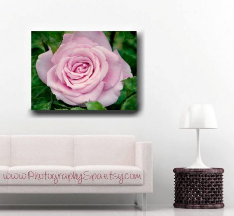 Flower canvas art, pink rose photography, floral canvas art, large wall art, rose gallery wrap, pink and green wall art, living room canvas