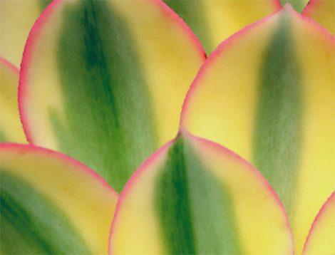 Abstract photography, succulent art print, botanical artwork 11x14, nature photograph modern abstract art, green yellow living room wall art