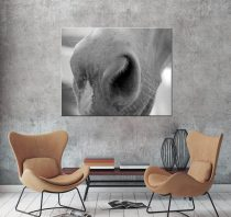 Horse art large canvas photography, black and white horse muzzle canvas wall art print, horse artwork, modern wall decor, horse lover gift