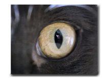 Cats eye art photography, cat artwork canvas print modern abstract, pet feline canvas art, cat lover gift, cat wall art, large wall decor