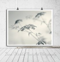 Botanical photography minimalist wall art, fennel wildflower, nature art photo 12x12, 11x14 grey off white neutral wall art, powder room art