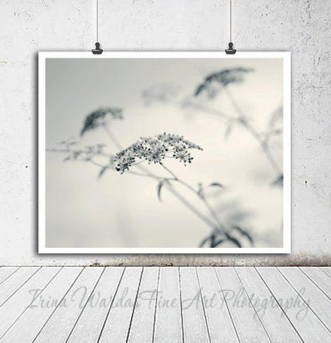 Botanical photography minimalist wall art, fennel wildflower, nature art photo 12x12, 11x14 grey off white neutral wall art, powder room art
