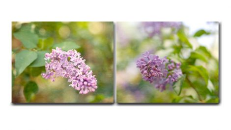 Lilac canvas set of 2, light purple room decor canvas wall art two canvas wrap, cottage chic decor floral photography on canvas gallery wall