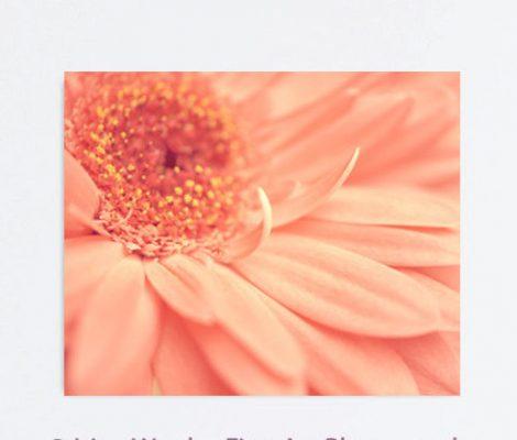 Peach flower canvas Gerbera daisy modern photograph nature gallery wrap, floral artwork large wall art, burnt orange coral bedroom art decor