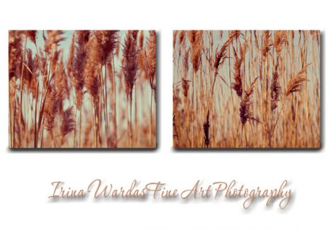Aqua brown nature wall art canvas photography, rust copper canvas grass wall art, rustic gold canvas wall decor print set of 2 gallery wall
