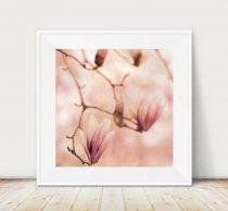 Magnolia art print, floral photography, dusty pink flower photo print  Spring nature wall art, 12x12 shabby chic bedroom wall art bath decor