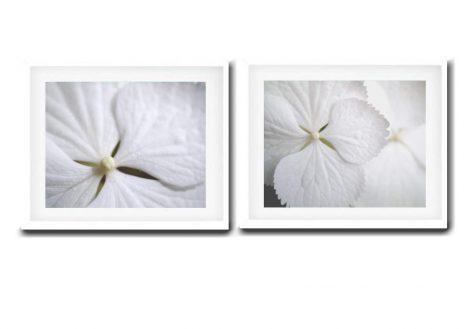 White art wall prints flower petal art, hydrangea modern photography set 2 bath pictures, white powder room girls nursery bedroom artwork