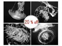 Black and white ocean print set of 4 photo prints, underwater photography jellyfish sea animal pictures, ocean wall art gallery wall art set