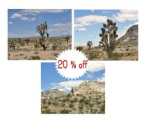 Southwest photography Joshua tree prints, California desert home decor photo prints, Southwestern wall art set of 3 prints nature art prints