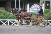 Old Dominion Draft Horse & Mule Show Sept 19-20