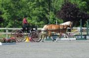 Morven Park Carriage Show June 2016