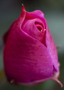 Macro Pink !