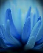 blue-3590p8x10...