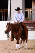 2013 Houston Livestock Show Horse Events
