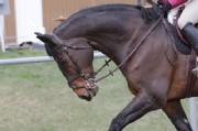 2015 Horse Shows