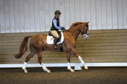 2013 Horse Shows