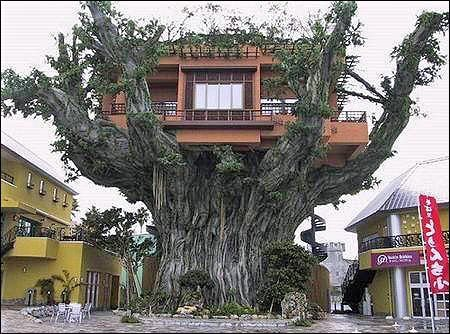 the biggest tree house in the world