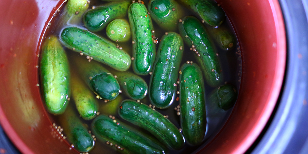 home | pickle day