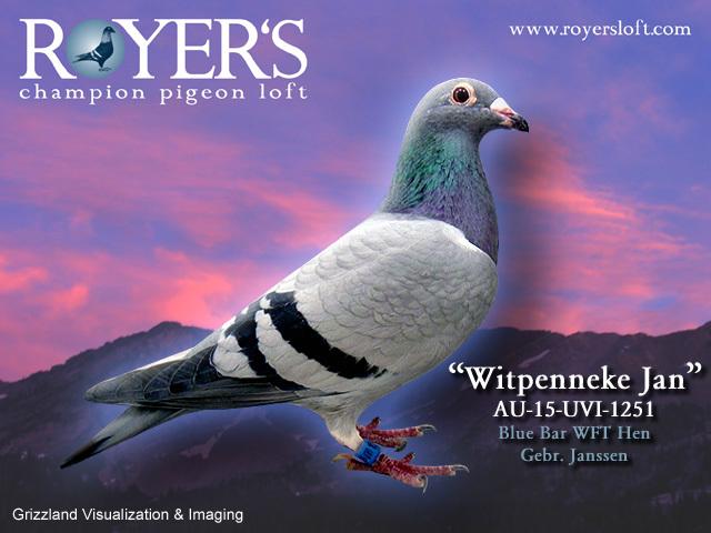 Witpenneke_jan
