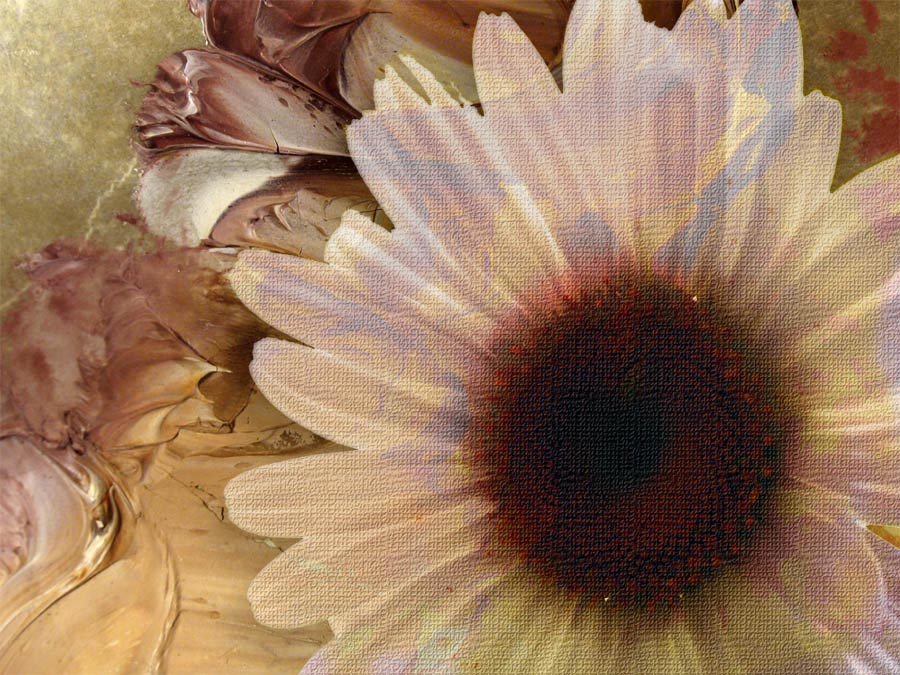 Daisy Texture Background