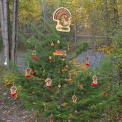 Kelowna Mission Creek Pathe Thanksgiving Tree