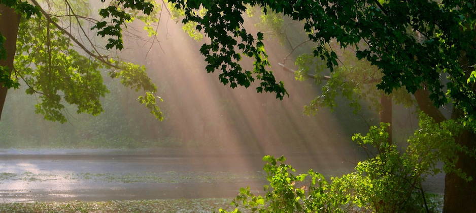 http://s3.amazonaws.com/placester-wordpress/blogs.dir/5395/files/2013/09/sun-rays-through-the-woods-938-419-161155.jpg