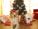 Keeping Your Pets Safe During the Holidays