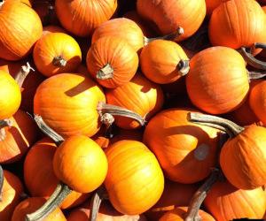 Best Pumpkin Patches in Northern Virginia