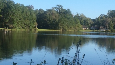 Killearn Lakes Plantation