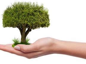 Plant a Tree and Add Value to Your Home