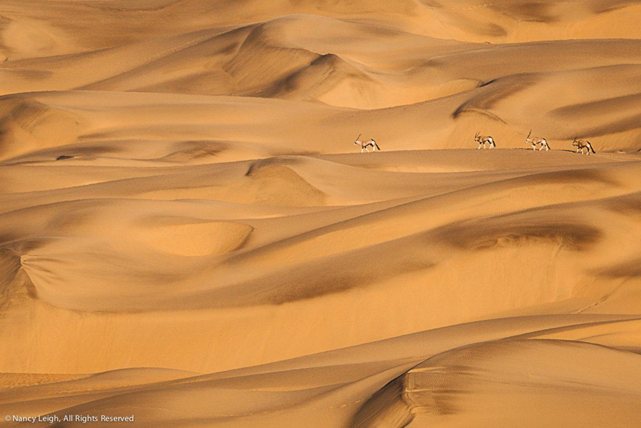 Oryx Dune Trek