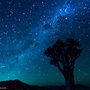 Quiver Tree, Milky Way, Andromeda