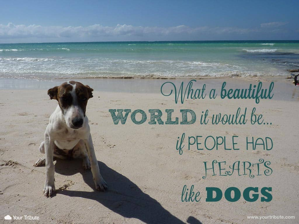 inspirational dog quote live life