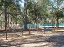 Green Tree Park