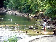 girl-with-ducks