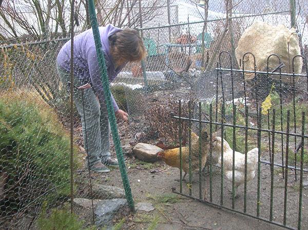 Philadelphia chicken owner, Jane Glenn, attended to her three 'girls.'