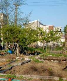 Private organizations morph vacant lots in open community gardens.