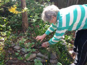 Parkwood resident Rita Varley tended to her garden.
