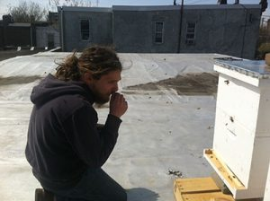 Josh Mints examines his bee hives.