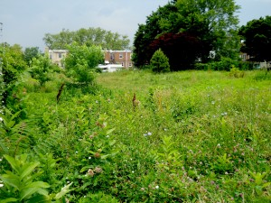 Roxborough dog owners fight to have this empty lot on the 4100 block of Mitchell Street be turned into a dog park.