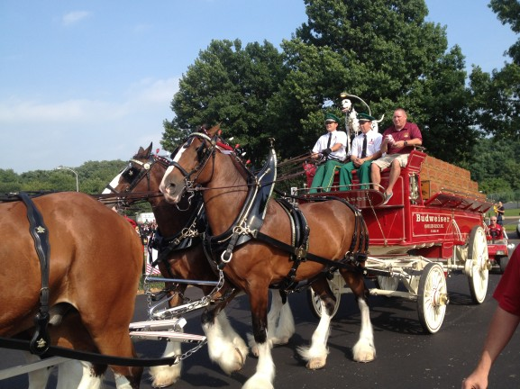 Clydesdale horses being directed to FOP building.