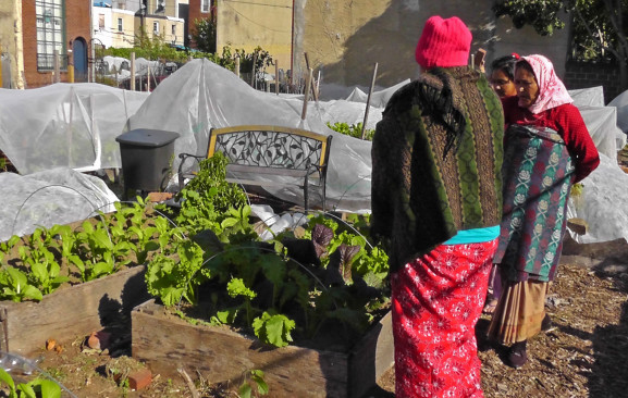 The PHiladelphia Refugee Health Collaborative has a garden on Emily Street for international produce.