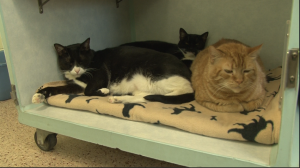 Cats resting inside cubby at PSPCA
