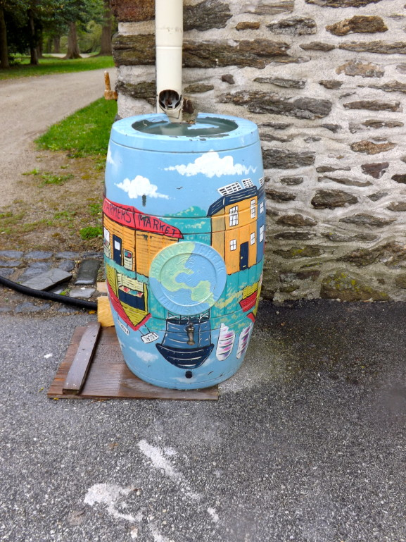 One of Mount Airy Business Improvement District rain barrels. The barrels, are used to reduce storm water run-off and to care for BID's greenery projects.
