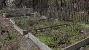 Growing plots line a garden on Bouvier Street.