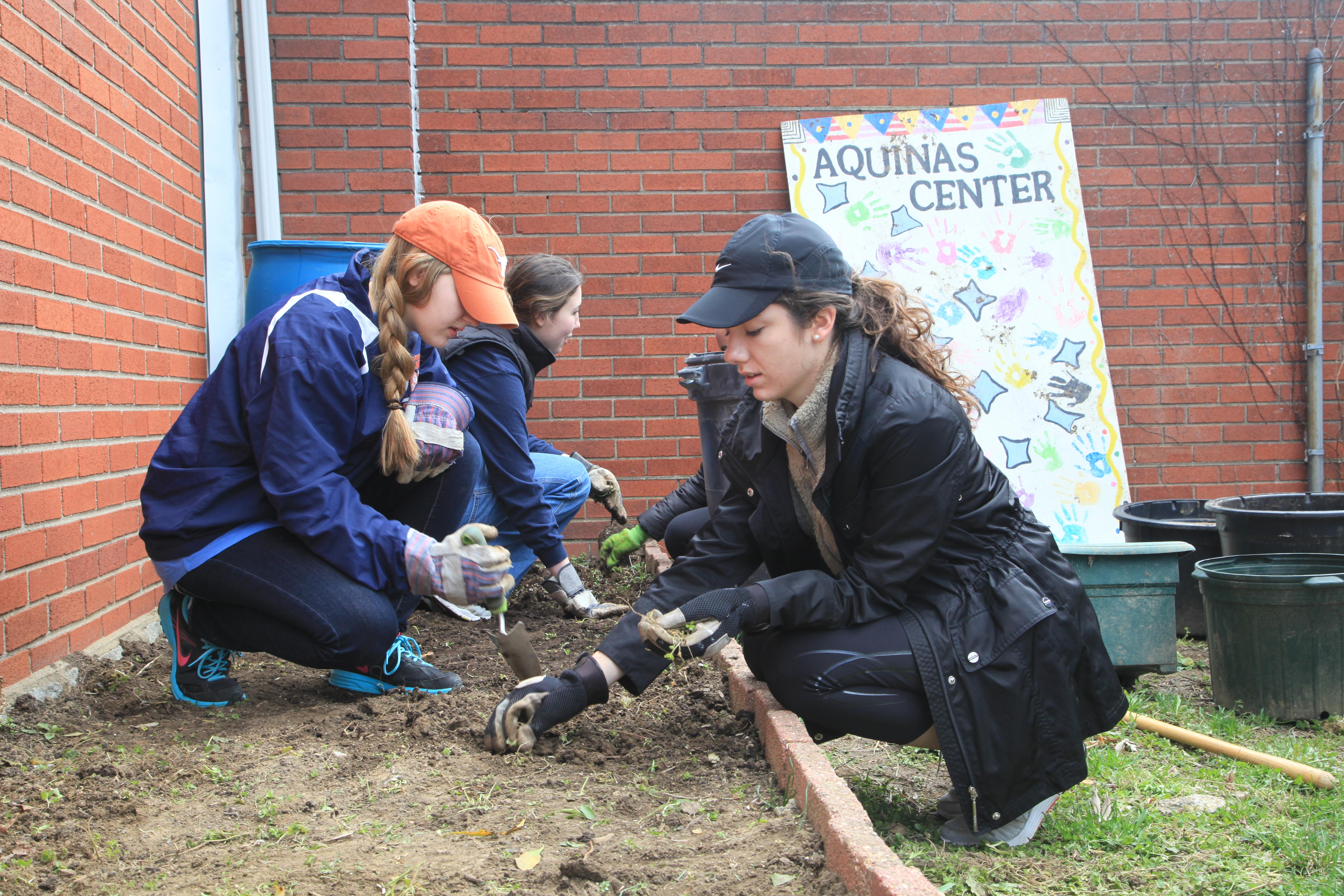 Volunteer gardeners spruce up the Aquinas Center court yard.