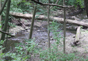 The West Branch Indian Creek flows towards the larger Cobb Creek.